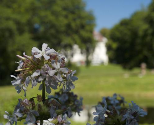 Frühling im Zinzower Landschaftspark