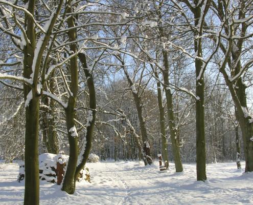 Winter im Landschaftspark Zinzow