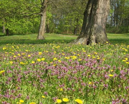 Blühende Naturwiesen - Frühling in Zinzow