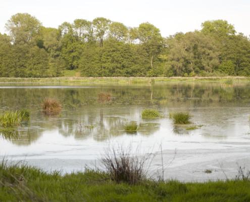 Bei einem Besuch erläutern wir Ihnen gerne die Bedeutung von Mooren und Feuchtgebieten für das natürliche Ökosystem