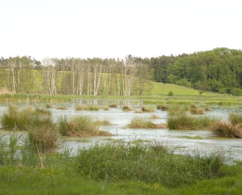 ... Feuchtwiesen und Moorgebiete